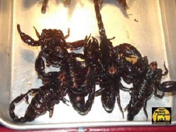 Scorpions at Khao San Road