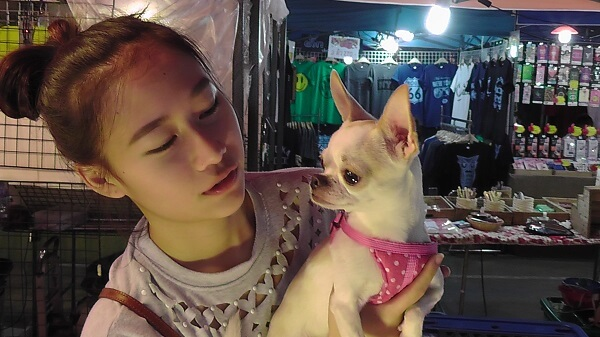 Cute dog with pink bandana at Train Market Ratchada